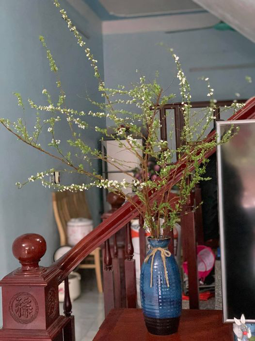 Bỏ túi ngay cách cắm hoa tuyết mai trang trí nhà cửa dịp Tết - Ảnh 2.
