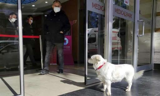 Clip: Cảm động chú chó đợi chủ điều trị Covid-19 suốt nhiều ngày tại cổng bệnh viện - Ảnh 2.