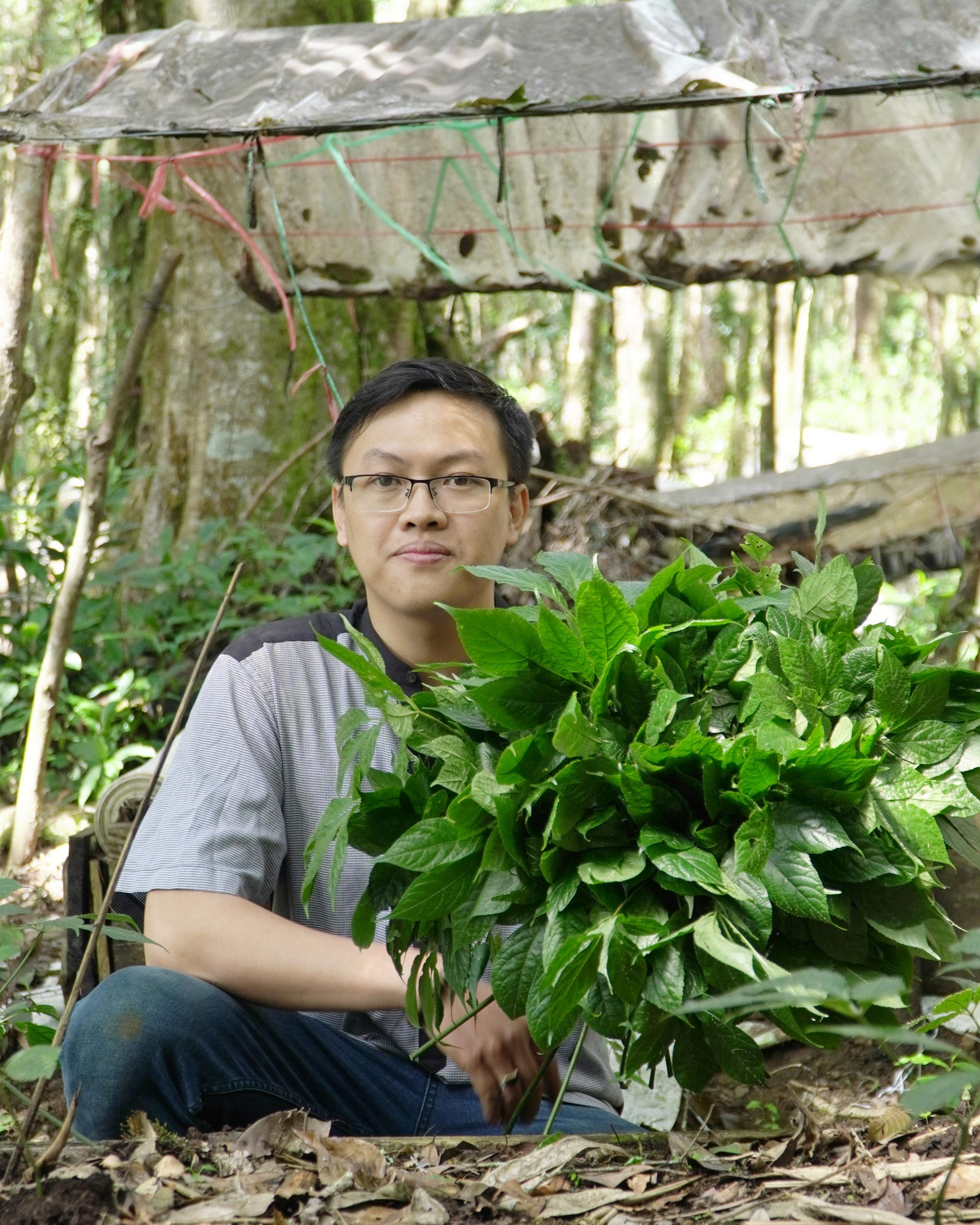 Chàng giảng viên làm giàu từ cây sâm Ngọc Linh - Ảnh 2.