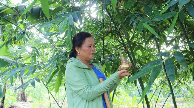 Bắc Giang: Một nông dân tỷ phú trồng giống tre gì mà mỗi ngày cắt măng bán kiếm được 3-5 triệu đồng? - Ảnh 1.