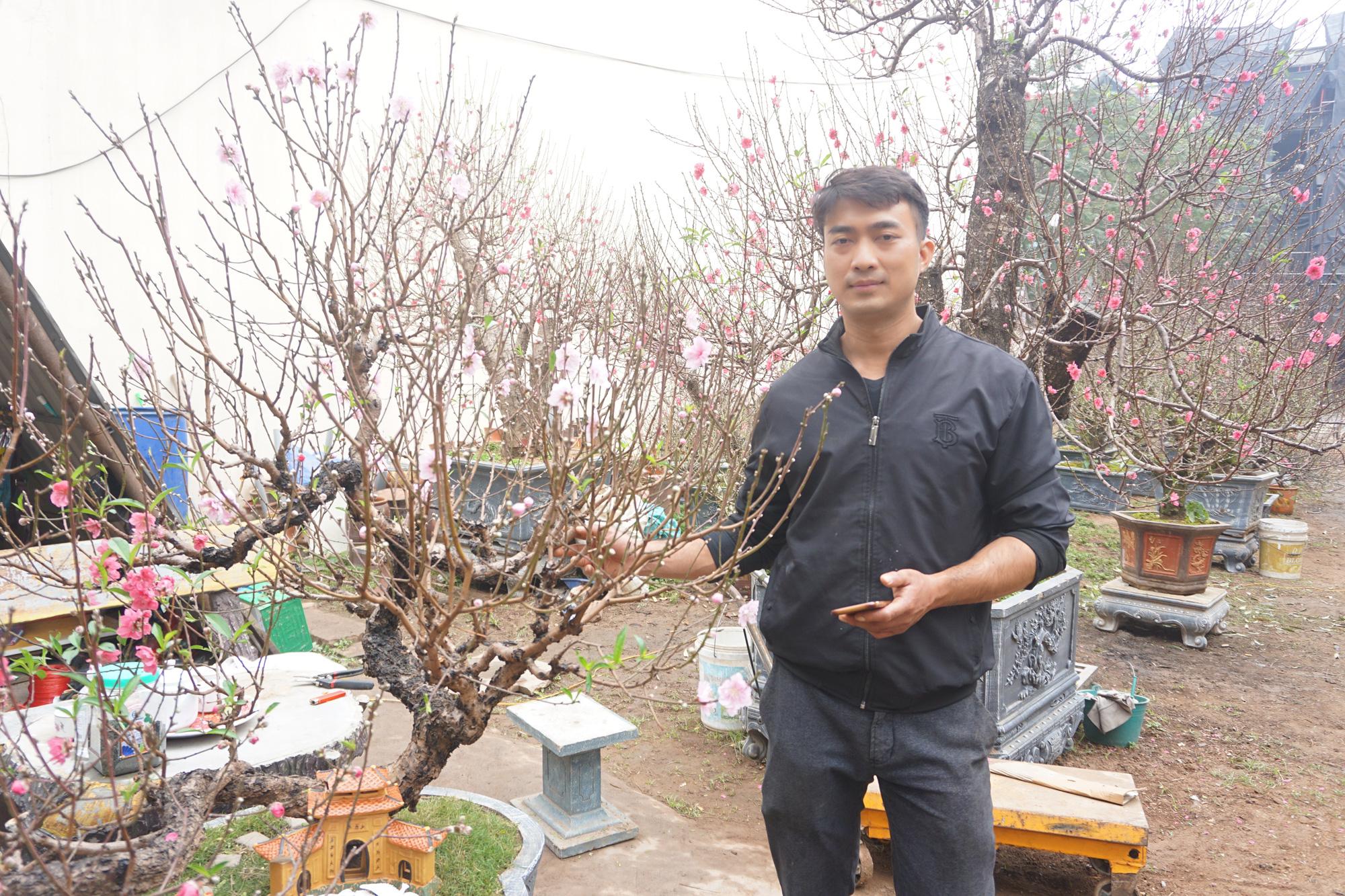 """Hà Nội: Đào Nhật Tân hàng chục năm tuổi được """"săn đón gắt gao"""", có người ngã giá cả trăm triệu về trưng Tết - Ảnh 5."""