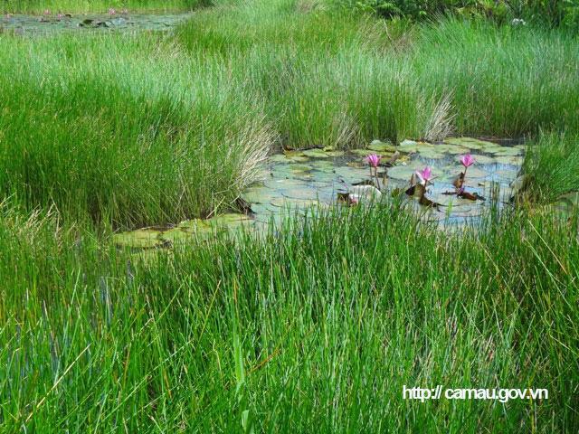 """Cà Mau: Lang thang ở cánh đồng hoang đặt trúm lươn đồng, lôi con lươn bự ra khỏi ống có người giật """"hết cả hồn"""" - Ảnh 2."""