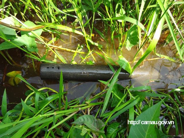 """Cà Mau: Lang thang ở cánh đồng hoang đặt trúm lươn đồng, lôi con lươn bự ra khỏi ống có người giật """"hết cả hồn"""" - Ảnh 5."""