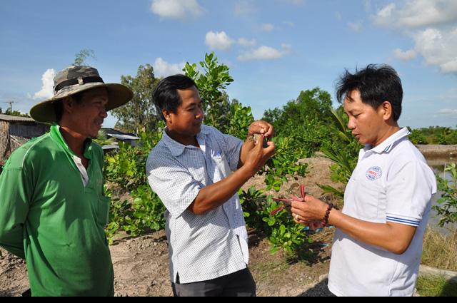 """Độc đáo: Nuôi cua, nuôi tôm ở ruộng lúa mà một nông dân tỉnh Kiên Giang """"đút túi"""" 300 triệu/năm - Ảnh 1."""
