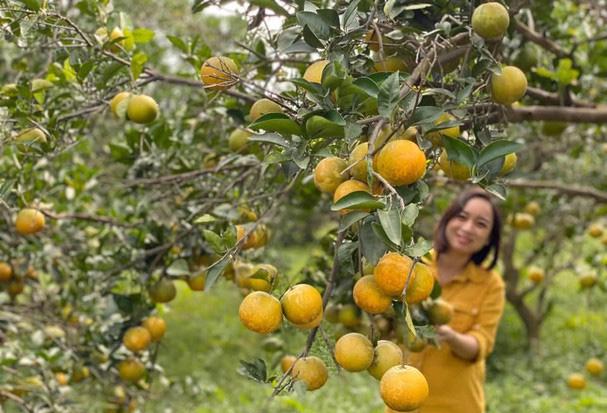 Trang trại cam Vinh đạt chuẩn xuất khẩu toàn cầu - Ảnh 1.