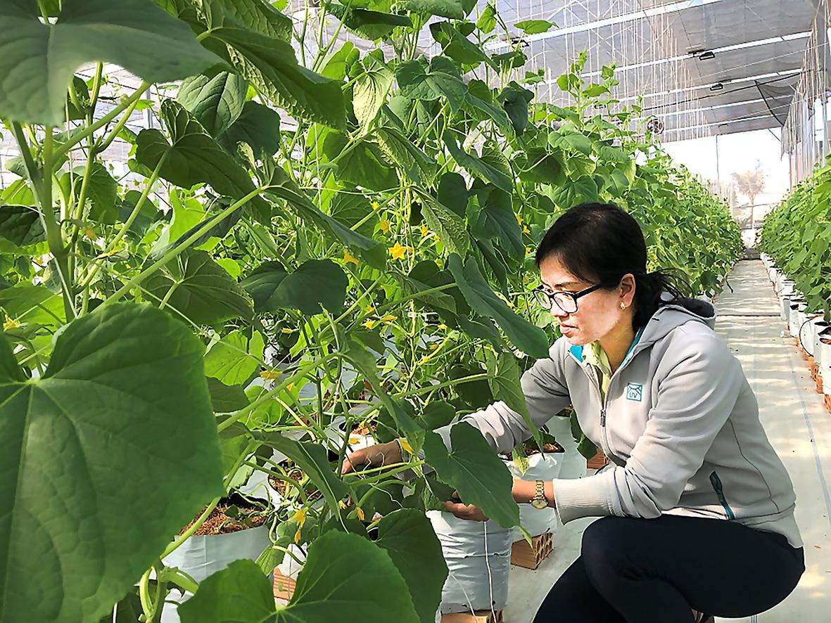 """Tỉnh Bà Rịa-Vũng Tàu: Nông nghiệp """"cất cánh"""" nhờ ứng dụng nông nghiệp công nghệ cao - Ảnh 1."""