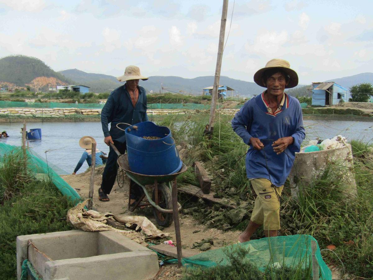 """Phú Yên: Rủ nhau ra vịnh Xuân Đài lượm ốc hương, tán chuyện """"trên trời dưới biển"""" mà vẫn ra tiền - Ảnh 6."""