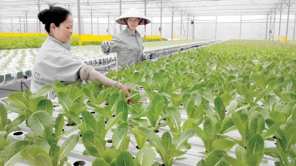 6 điều quan trọng về hạn mức sử dụng đất nông nghiệp - Ảnh 2.
