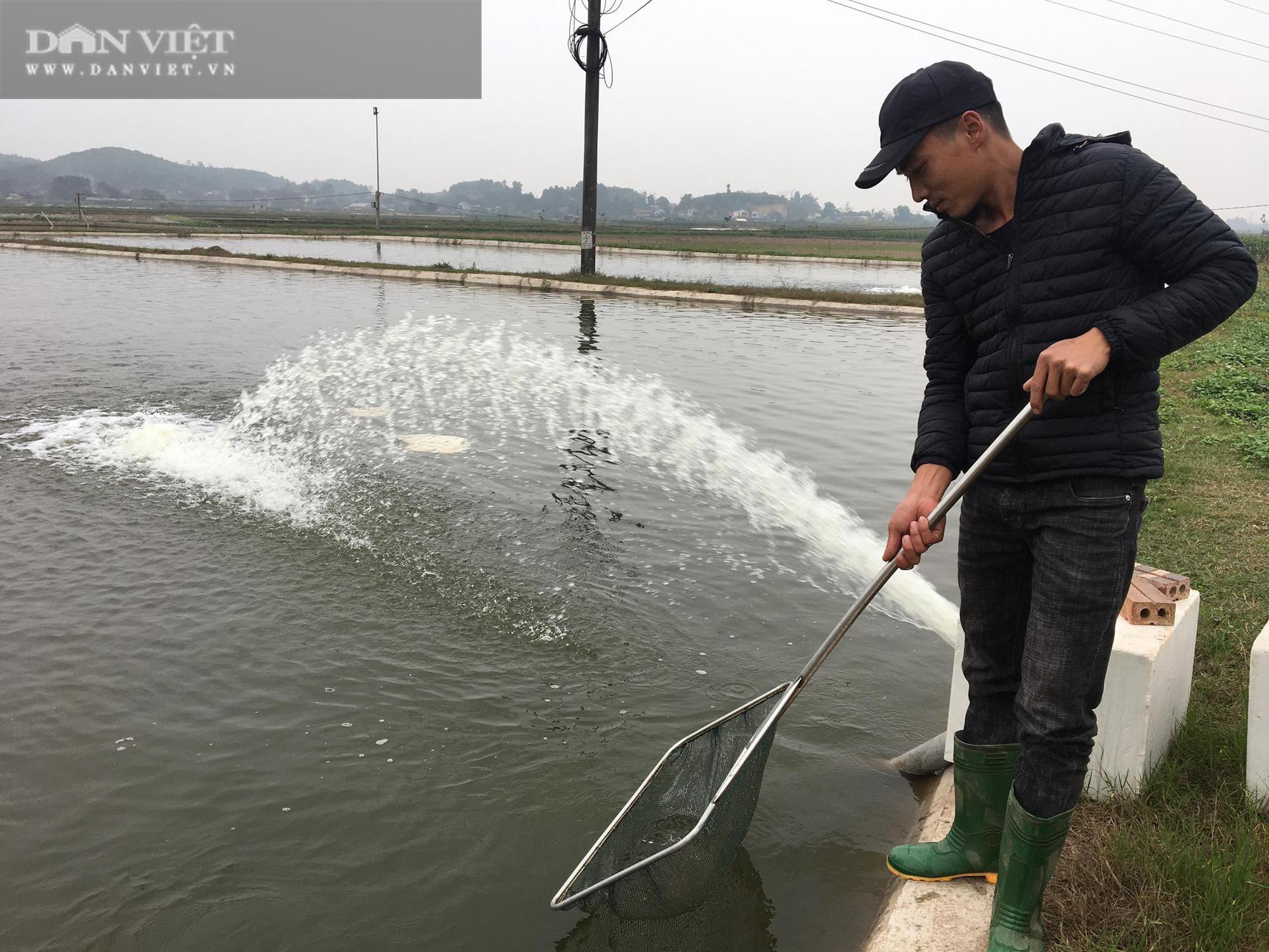 """Phú Thọ: Bản lĩnh vay ngân hàng làm giàu, mỗi năm ông chủ U40 """"ẵm"""" hàng trăm triệu từ cá giống - Ảnh 1."""