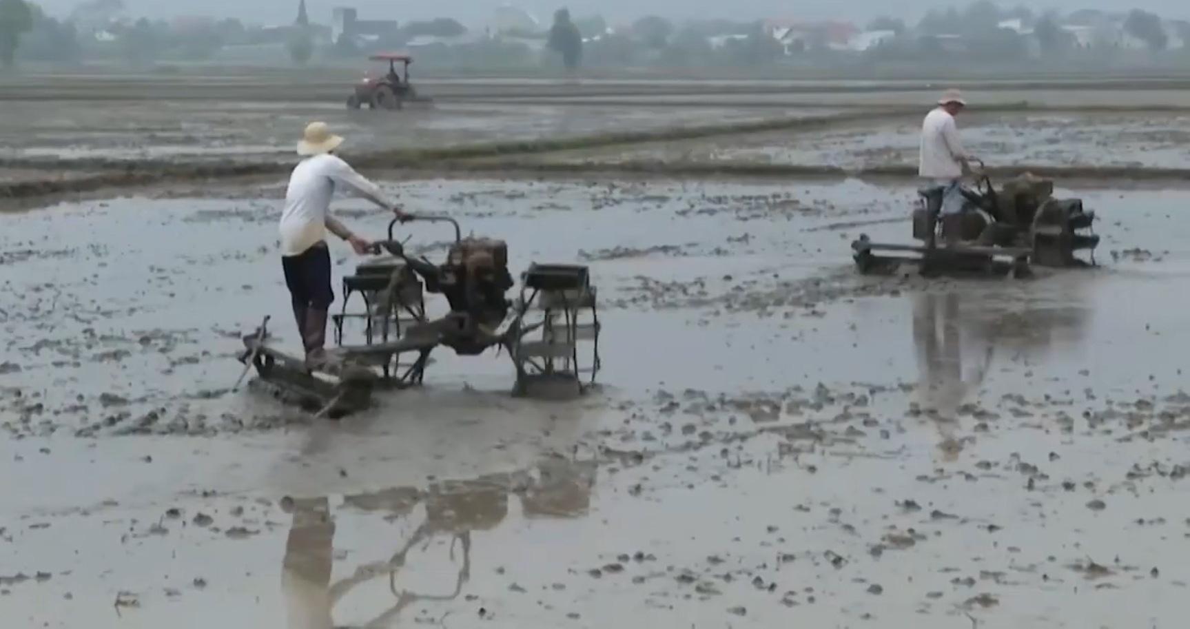 Nông dân Bà Rịa - Vũng Tàu khẩn trương xuống giống vụ lúa đông - xuân 2020-2021 - Ảnh 2.