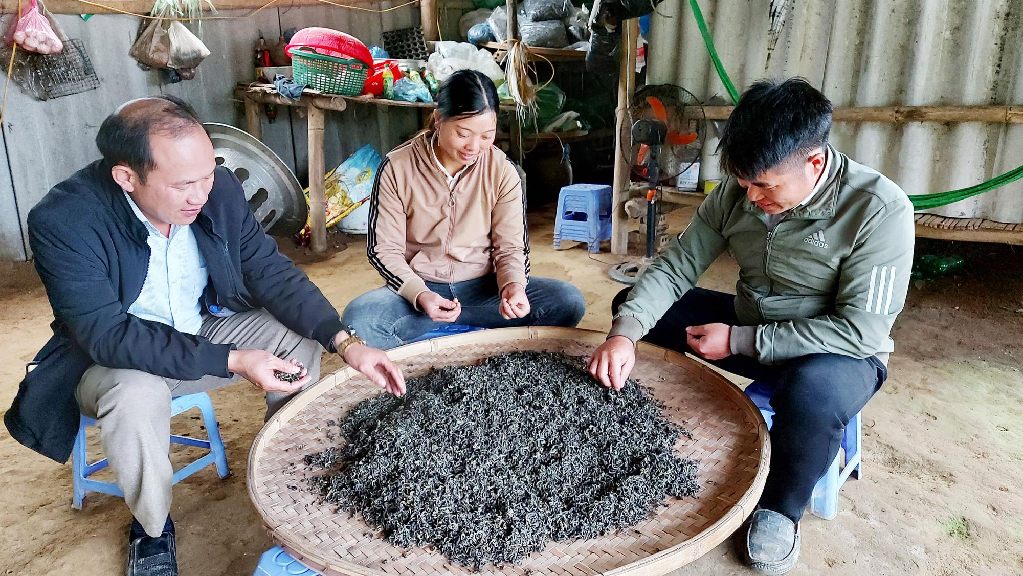 Lào Cai: Kho báu ở trên núi Ngải Trồ dân hái ngọn bán sang Trung Quốc thực ra là thứ gì? - Ảnh 7.