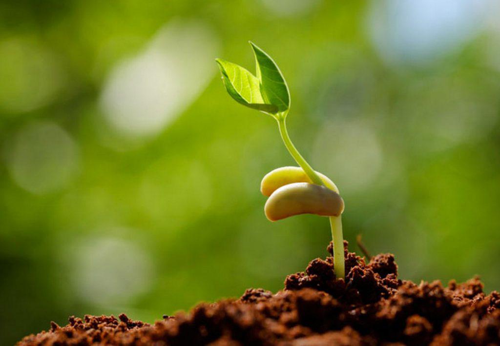 3 tỉnh được cấp miễn phí hàng trăm tấn hạt giống - Ảnh 1.