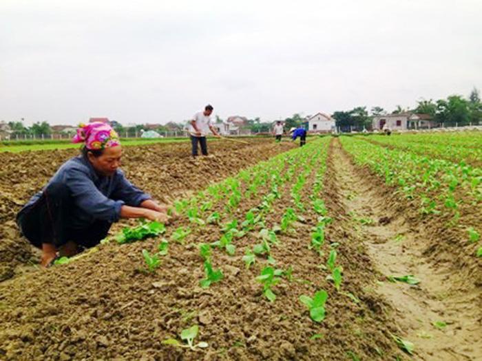 3 tỉnh được cấp miễn phí hàng trăm tấn hạt giống - Ảnh 3.