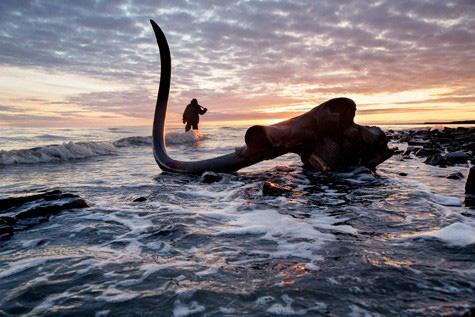 Nghề lạ, đi đào ngà voi ma mút vừa dài vừa cong, cả năm làm có 65 ngày đút túi mấy tỷ đồng? - Ảnh 1.