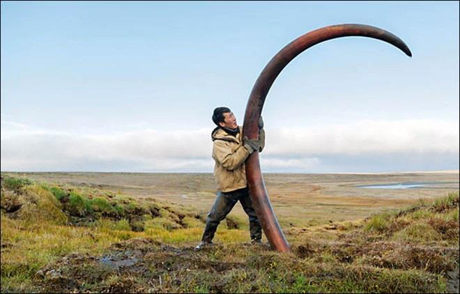 Nghề lạ, đi đào ngà voi ma mút vừa dài vừa cong, cả năm làm có 65 ngày đút túi mấy tỷ đồng? - Ảnh 4.