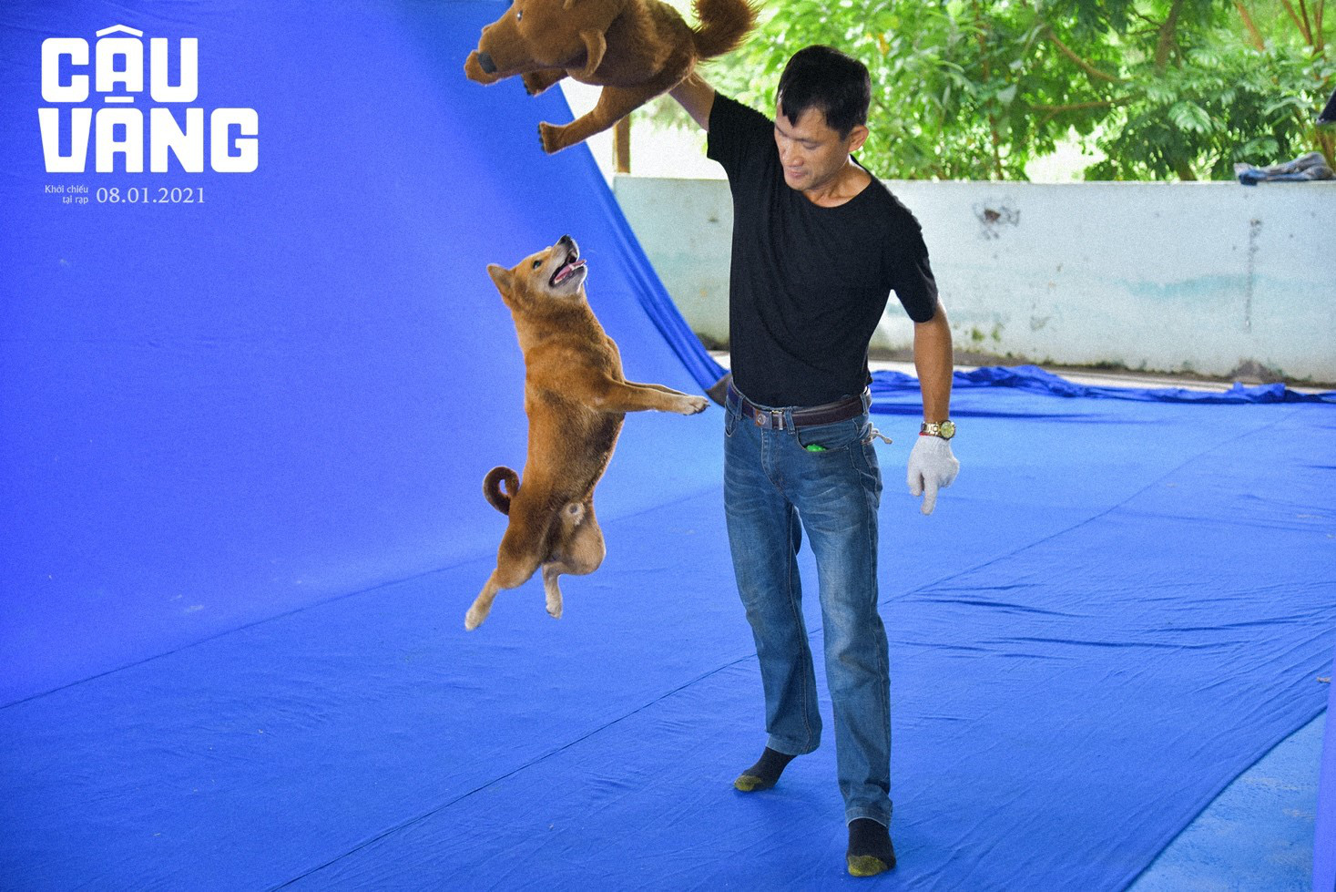 Gây tranh cãi từ khi xuất hiện, chó Shiba đã được huấn luyện thành cậu Vàng như thế nào - Ảnh 3.