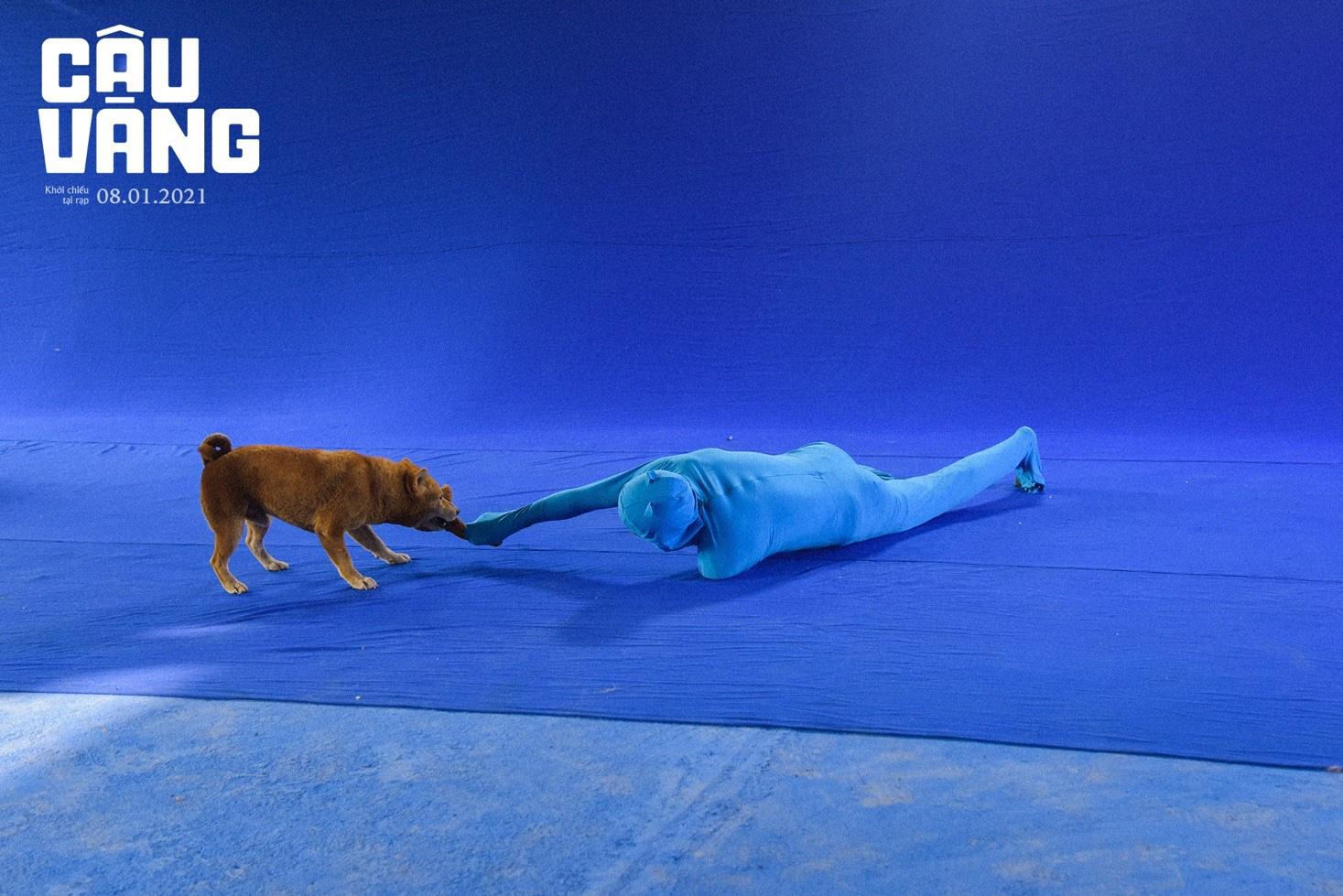 Gây tranh cãi từ khi xuất hiện, chó Shiba đã được huấn luyện thành cậu Vàng như thế nào - Ảnh 4.