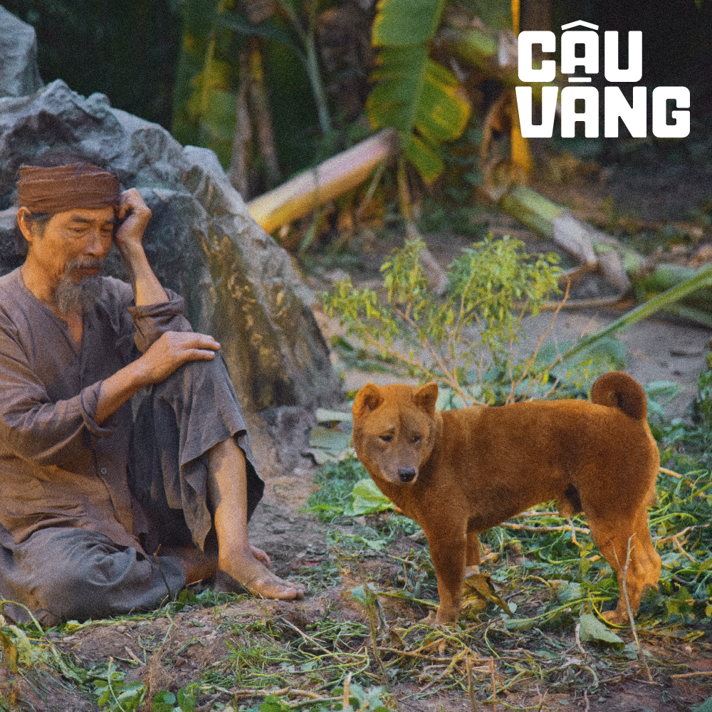 Gây tranh cãi từ khi xuất hiện, chó Shiba đã được huấn luyện thành cậu Vàng như thế nào - Ảnh 2.
