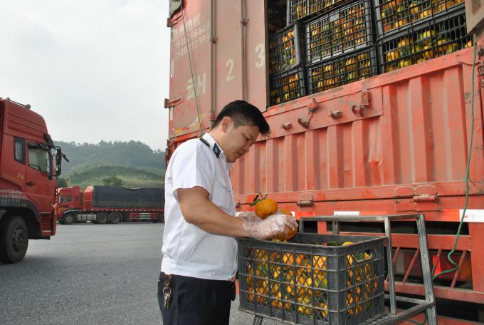 20.000 hồ sơ, thủ tục liên quan kiểm dịch thực vật ở Lào Cao được xử lý qua mạng - Ảnh 1.