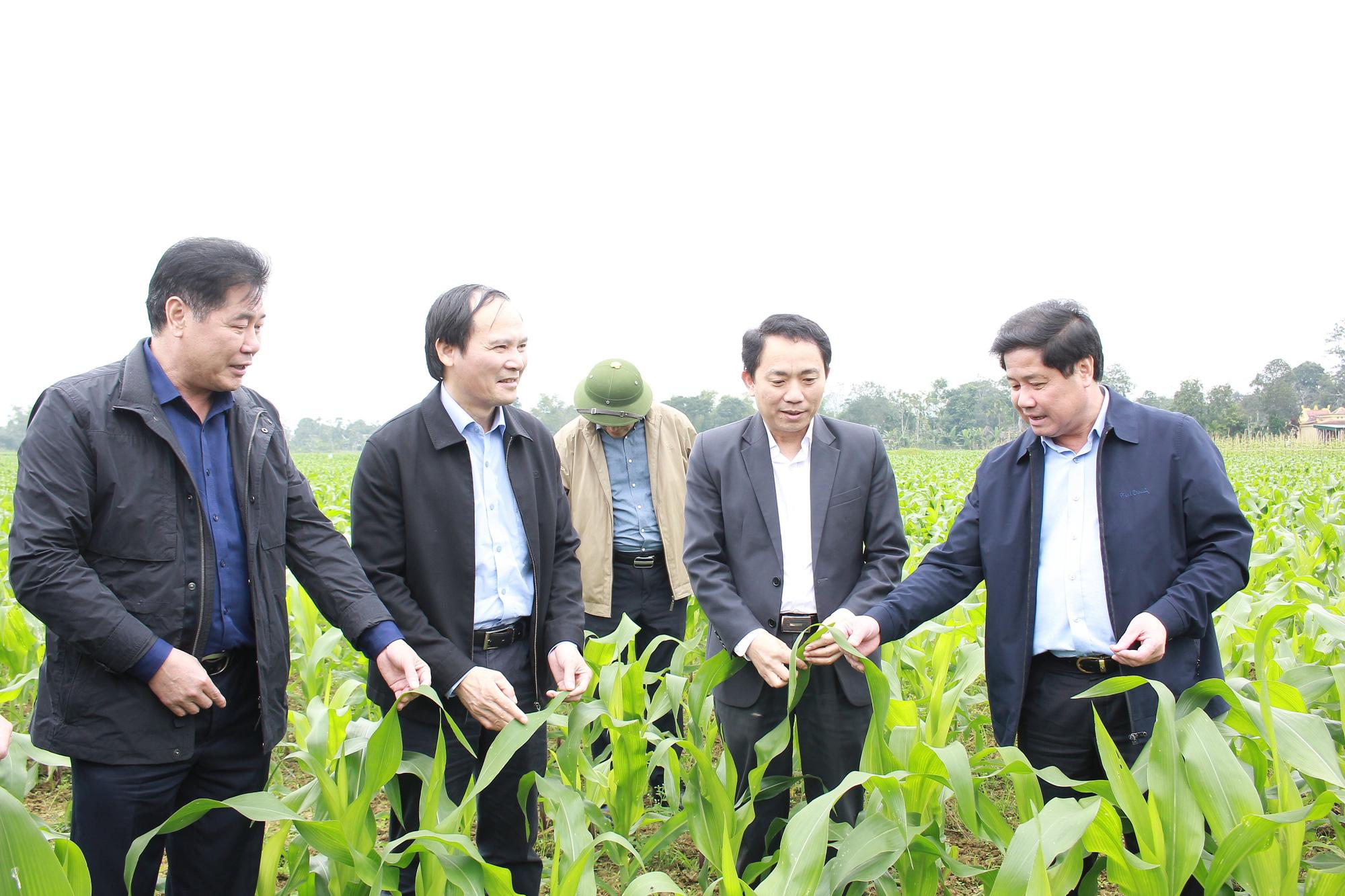Tập trung khắc phục khó khăn, khôi phục sản xuất nông nghiệp sau thiên tai tại Hà Tĩnh và Quảng Bình - Ảnh 1.