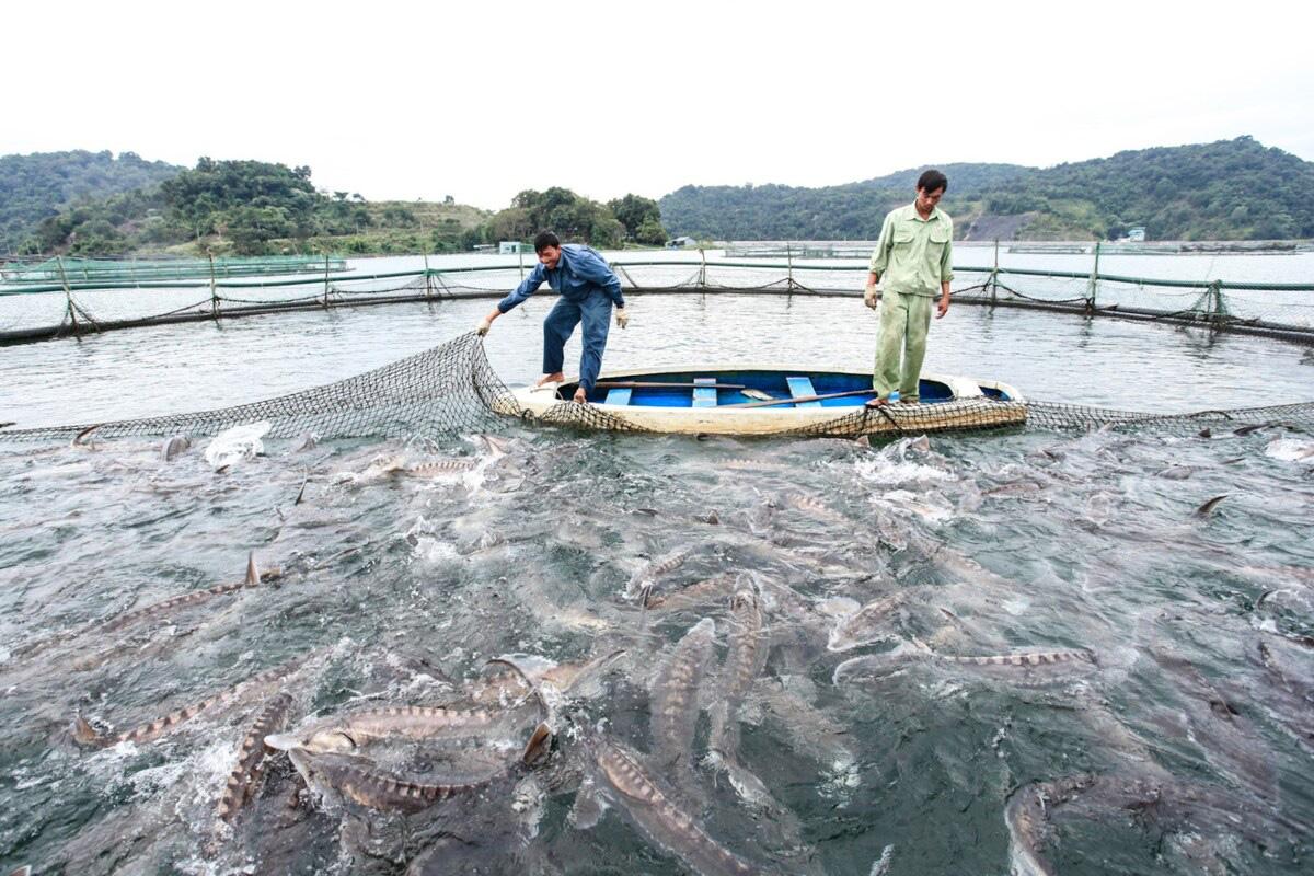 Sơn La phấn đấu trở thành trung tâm sản xuất giống, nuôi trồng thủy sản lớn nhất vùng Tây Bắc - Ảnh 3.