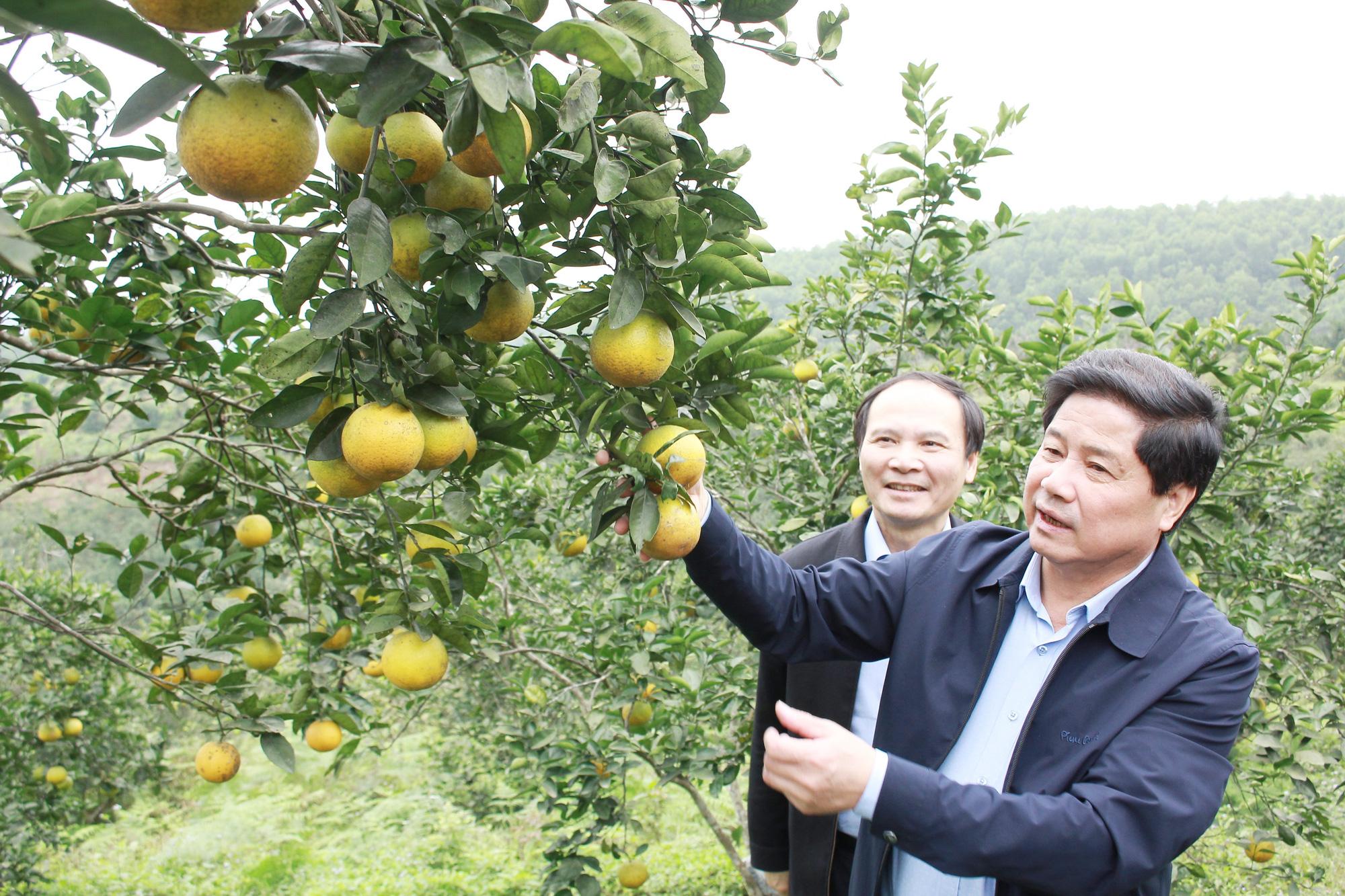Tập trung khắc phục khó khăn, khôi phục sản xuất nông nghiệp sau thiên tai tại Hà Tĩnh và Quảng Bình - Ảnh 2.