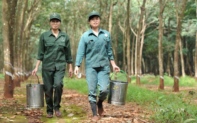 Công nhân cạo mủ cao su của Tập đoàn Công nghiệp cao su Việt Nam