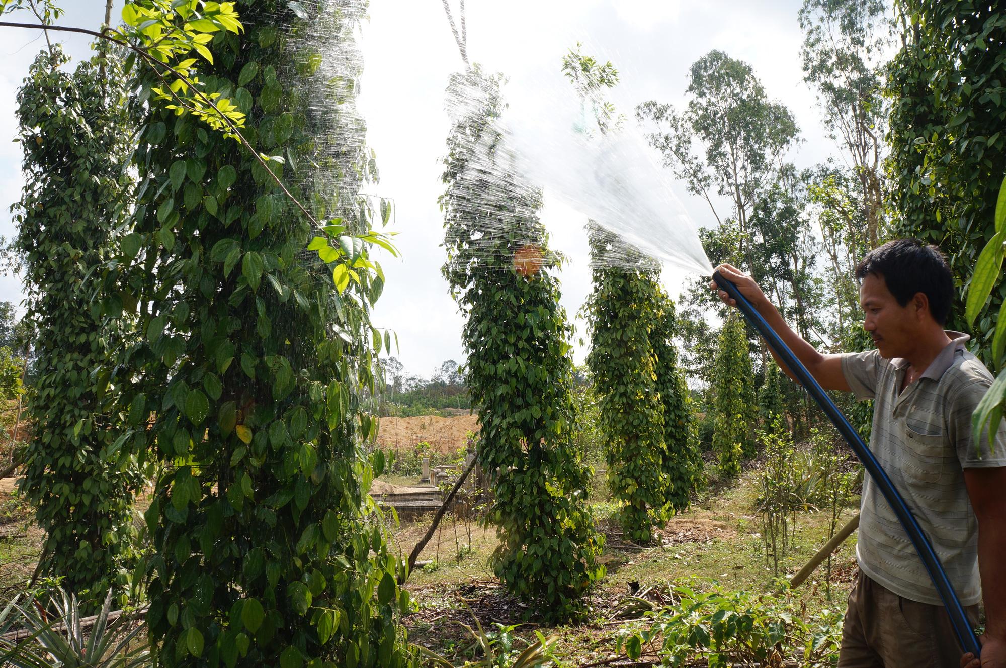 Quảng Nam: Biến những thứ bỏ đi thành 6.420 tấn phân hữu cơ giúp nông dân - Ảnh 3.