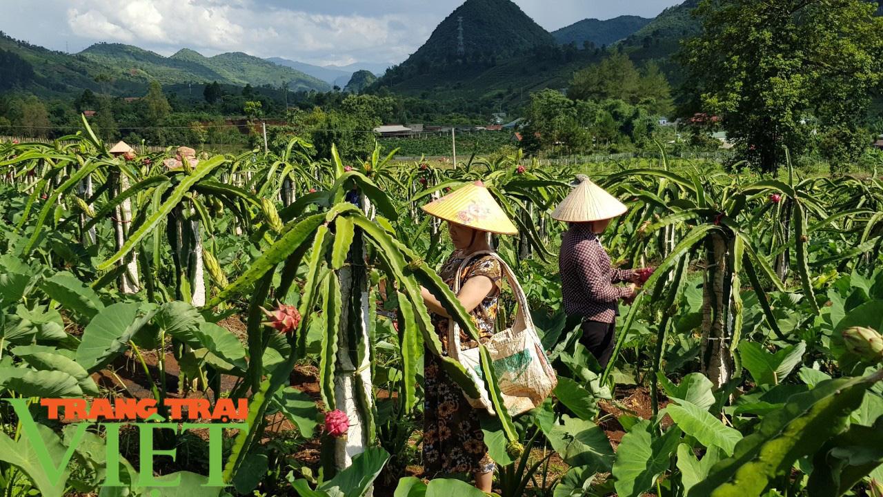 Nông dân Thuận Châu thi đua sản xuất, kinh doanh giỏi - Ảnh 5.