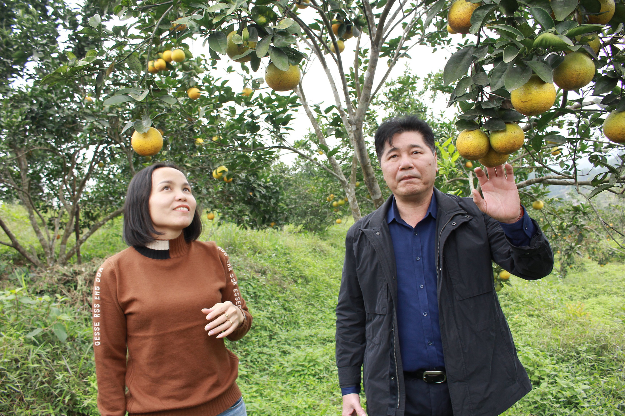 Tập trung khắc phục khó khăn, khôi phục sản xuất nông nghiệp sau thiên tai tại Hà Tĩnh và Quảng Bình - Ảnh 4.