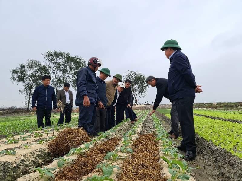 Tập trung khắc phục khó khăn, khôi phục sản xuất nông nghiệp sau thiên tai tại Hà Tĩnh và Quảng Bình - Ảnh 5.