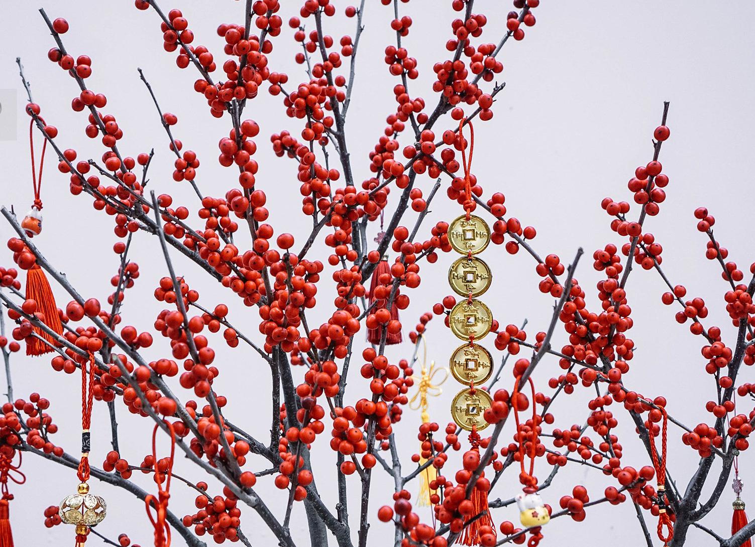 Cận cảnh đào đông nguyên chậu về Việt Nam chơi Tết, nhìn như cây giả mà đắt không tưởng - Ảnh 7.