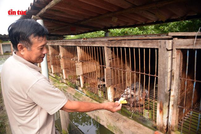 Cà Mau: Làm chuồng trên mặt nước nuôi loài thú trông như mèo mướp, hay đòi ăn chuối mà nông dân lời tiền tỷ - Ảnh 4.