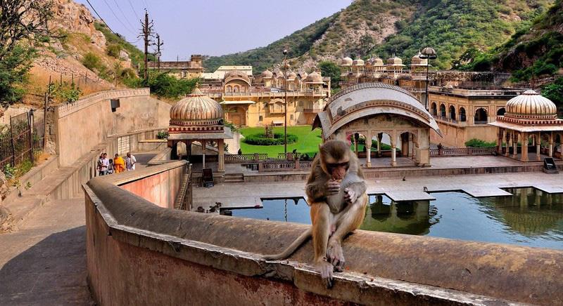 Ngôi đền cho khỉ đẹp tựa cung điện - Ảnh 5.