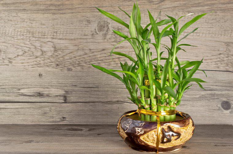 Năm 2021, 12 con giáp nên trồng cây phong thủy gì để vượng phát tài lộc? - Ảnh 4.