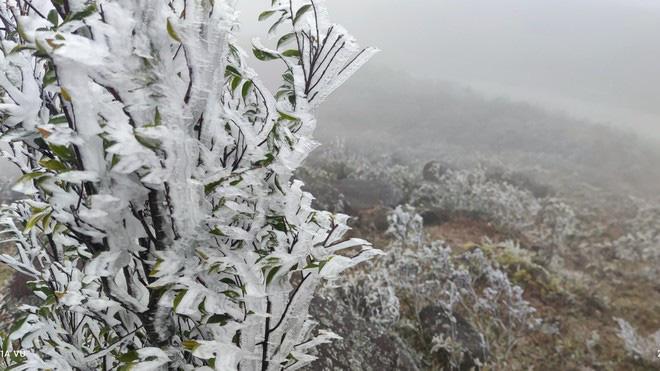 Đỉnh Mẫu Sơn lạnh -1,5 độ C, xuất hiện băng giá; miền Bắc chìm trong giá rét - Ảnh 3.
