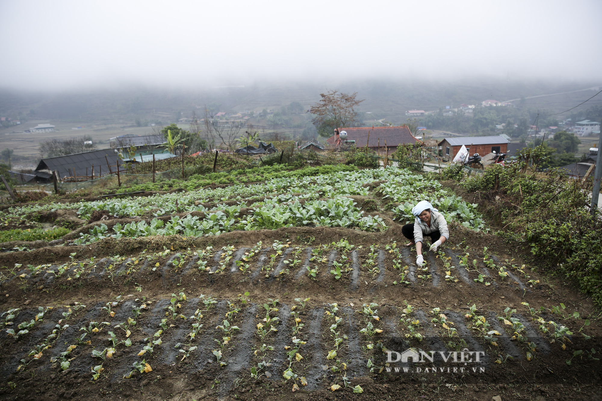 """Nông dân Sa Pa """"căng mình"""" bảo vệ cây trồng, vật nuôi trước nguy cơ xuất hiện mưa tuyết - Ảnh 1."""
