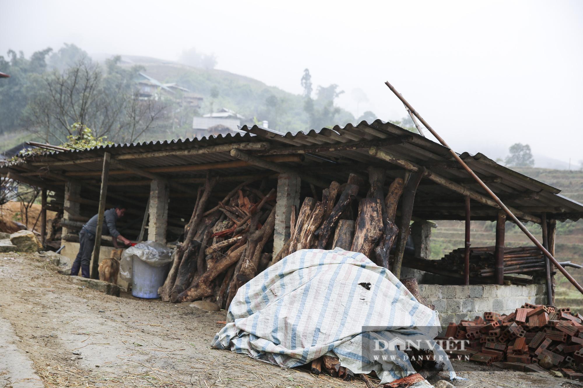 """Nông dân Sa Pa """"căng mình"""" bảo vệ cây trồng, vật nuôi trước nguy cơ xuất hiện mưa tuyết - Ảnh 13."""