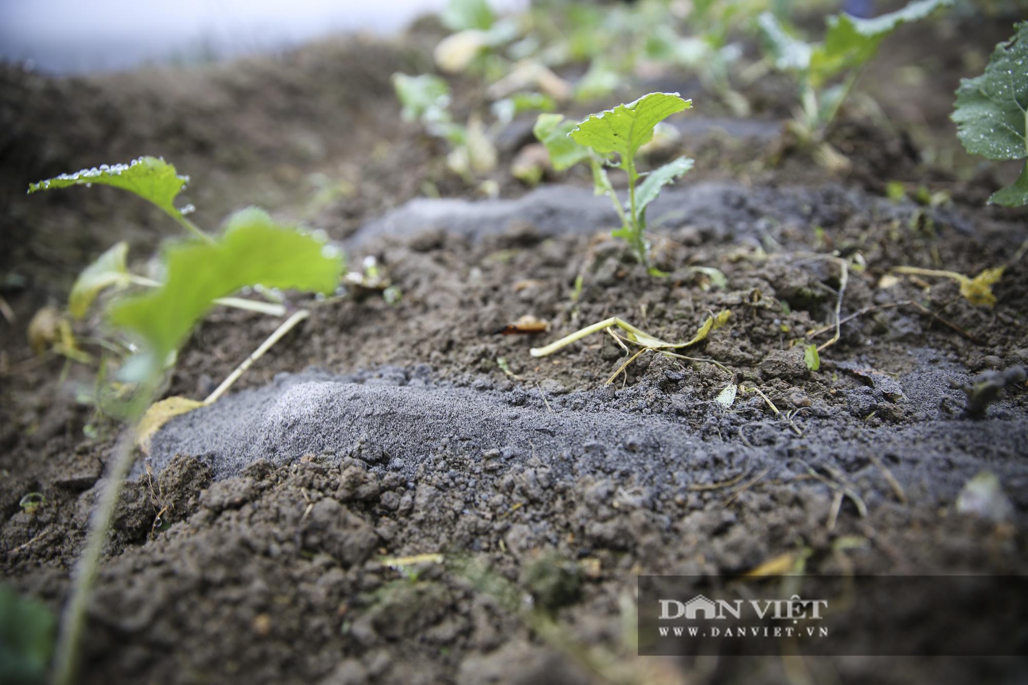 """Nông dân Sa Pa """"căng mình"""" bảo vệ cây trồng, vật nuôi trước nguy cơ xuất hiện mưa tuyết - Ảnh 2."""