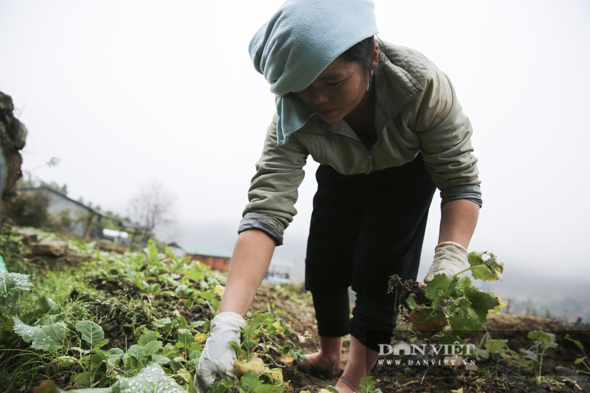 """Nông dân Sa Pa """"căng mình"""" bảo vệ cây trồng, vật nuôi trước nguy cơ xuất hiện mưa tuyết - Ảnh 3."""