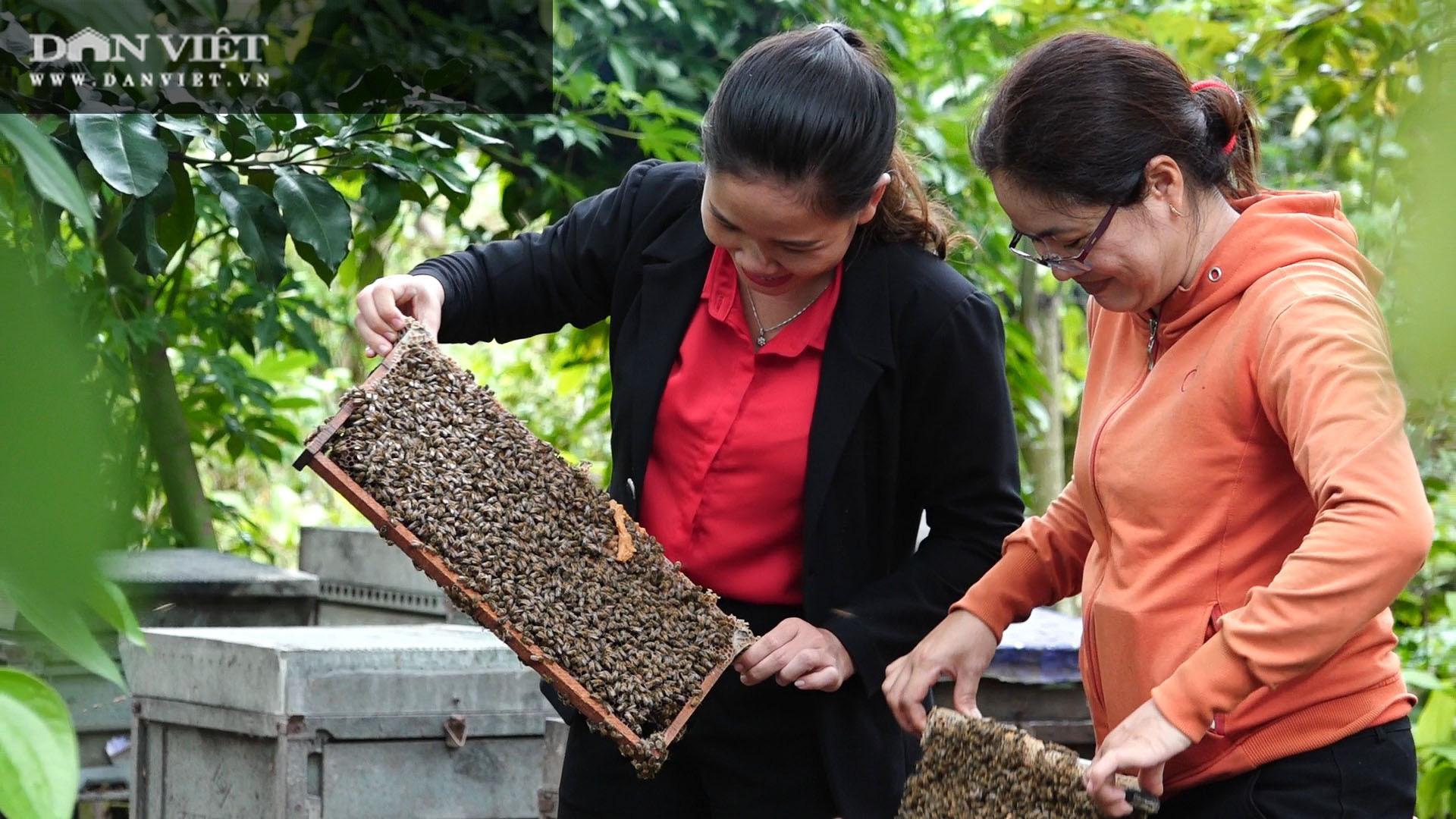 Du mục với đàn ong khắp các vùng hoa trù phú, nông dân sống khỏe với những vụ mật ngọt ngào - Ảnh 1.