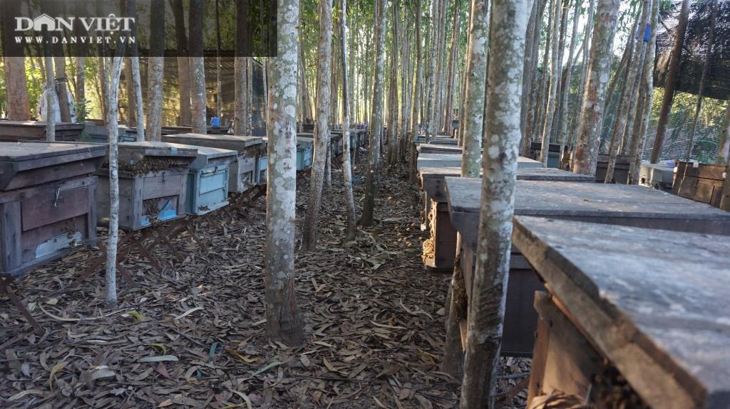 Du mục với đàn ong khắp các vùng hoa trù phú, nông dân sống khỏe với những vụ mật ngọt ngào - Ảnh 2.