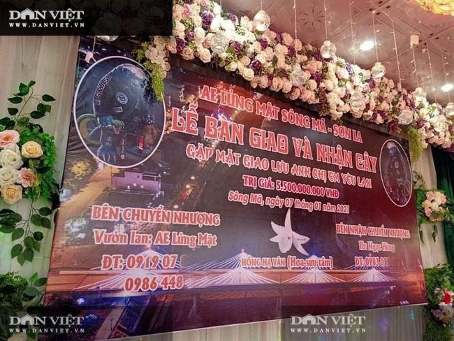 Sơn La: Chuyển nhượng lan Hồng Hạ Vân đột biến trị giá 5,5 tỷ đồng khiến dư luận xôn xao  - Ảnh 2.
