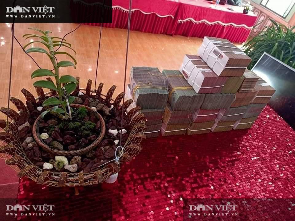 Sơn La: Chuyển nhượng lan Hồng Hạ Vân đột biến trị giá 5,5 tỷ khiến dư luận xôn xao  - Ảnh 1.