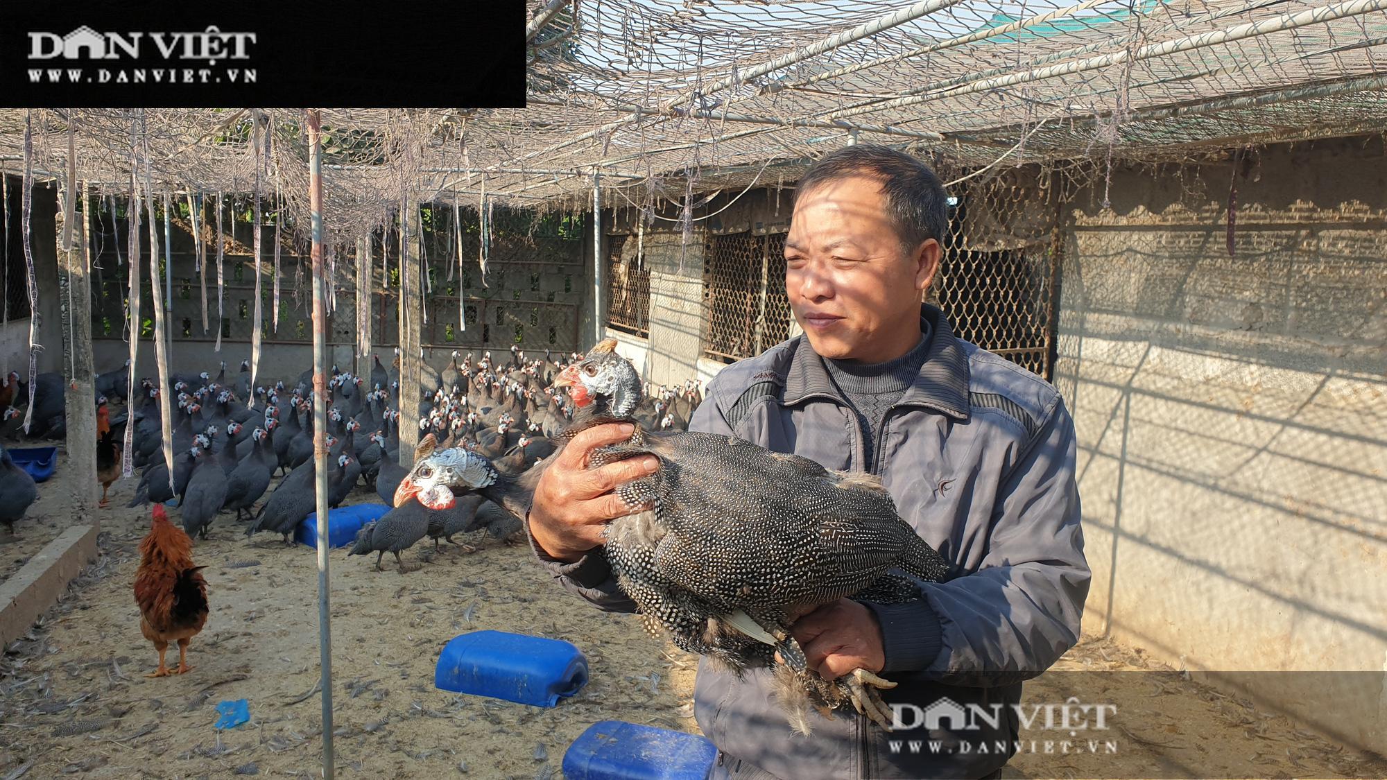 Nuôi con gì bán Tết: Nuôi đàn gà bay như chim, kêu điếc tai, lão nông đếm tiền mỏi tay - Ảnh 2.