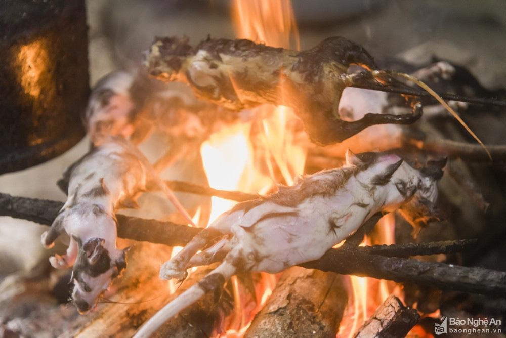 Thơm 'điếc mũi' thịt chuột rừng nơi Cổng trời Mường Lống tỉnh Nghệ An - Ảnh 4.
