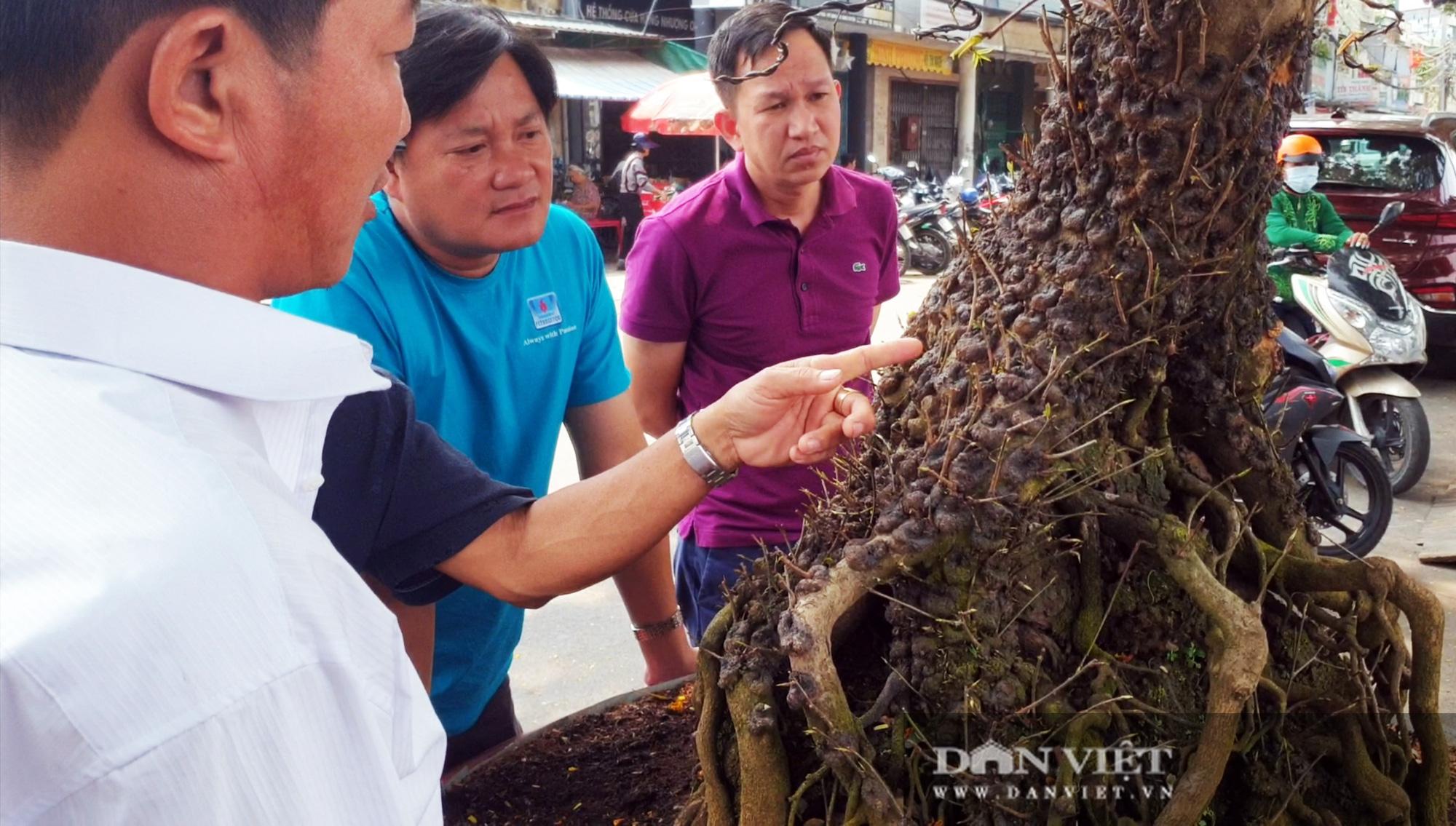 Hai cây mai vàng nổi 'vảy rồng' giá 700 triệu đồng ở An Giang - Ảnh 6.