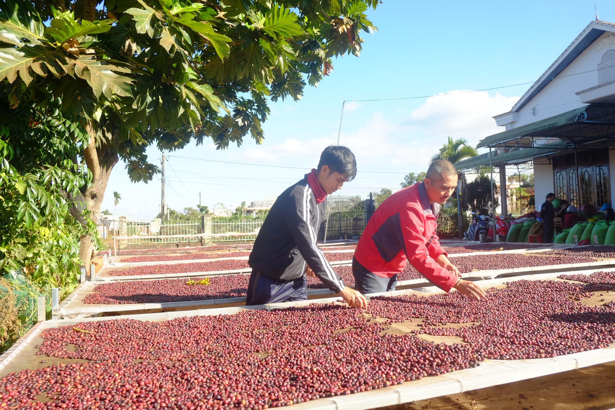 Nhu cầu tiêu thụ cà phê do giãn cách chống Covid-19 tăng, xuất khẩu cà phê khởi sắc - Ảnh 1.