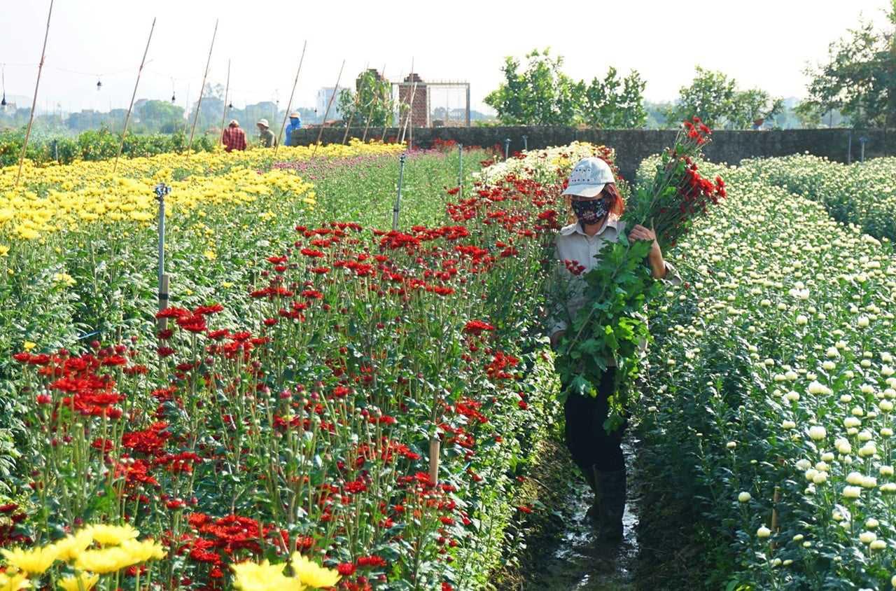 Nông sản ở ổ dịch Đông Triều đã được giải cứu như thế nào? - Ảnh 2.