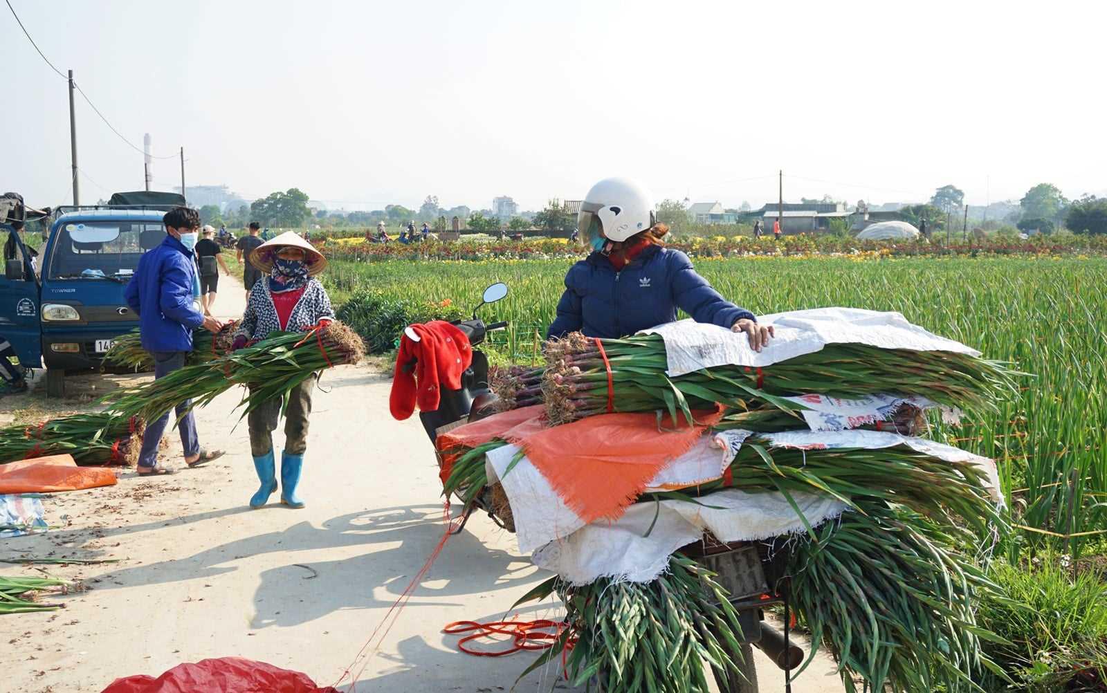 Nông sản ở ổ dịch Đông Triều đã được giải cứu như thế nào? - Ảnh 3.